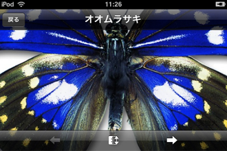 butterfly0821_02.png